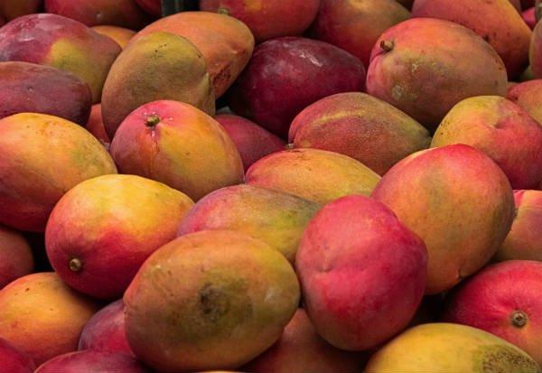 Tipos de mango: Palmer Mango - Foto: Shutterstock
