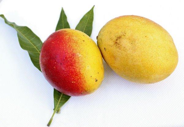 Tipos de mango: mango de Haden - Foto: Shutterstock