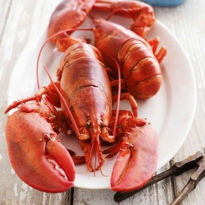 El quitosano se obtiene del exoesqueleto de insectos o crustáceos - Foto: Getty Images