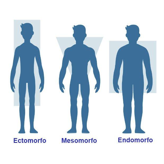Foto de biotipos corporales: Shutterstock / Sudowoodo